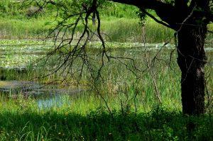 Clark and Pine Preserve