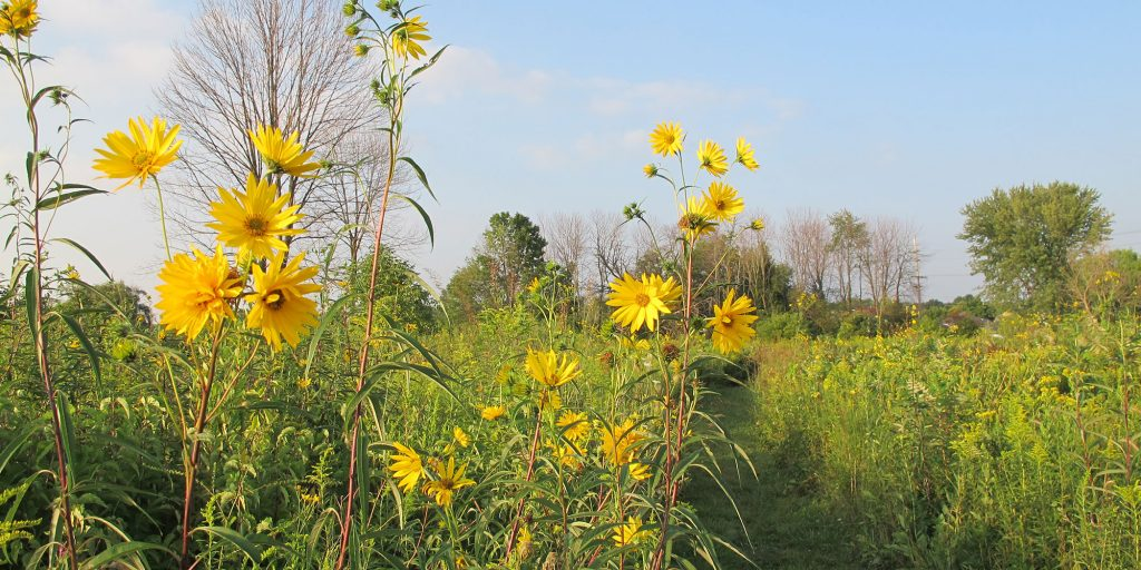Cressmoor Prairie Nature Preserve