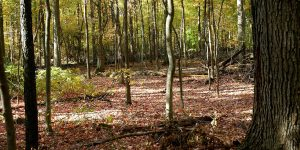 Barker Woods Nature Preserve
