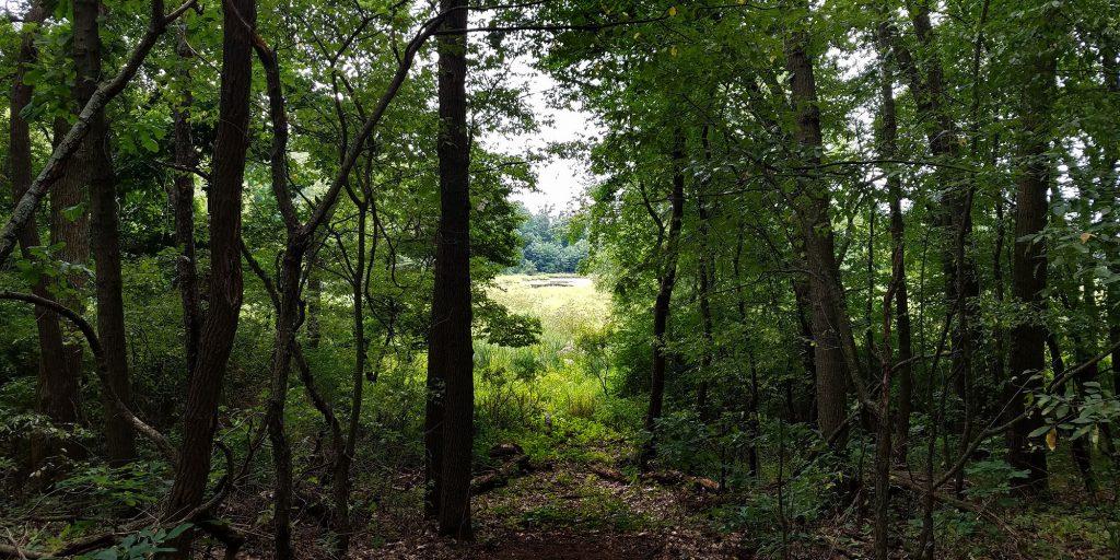 Lydick Bog Nature Preserve