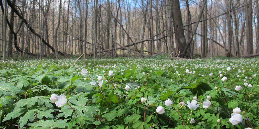 Myrna J. Newgent Nature Preserve