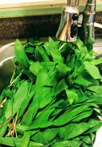 photo of Harvested and washed ramps