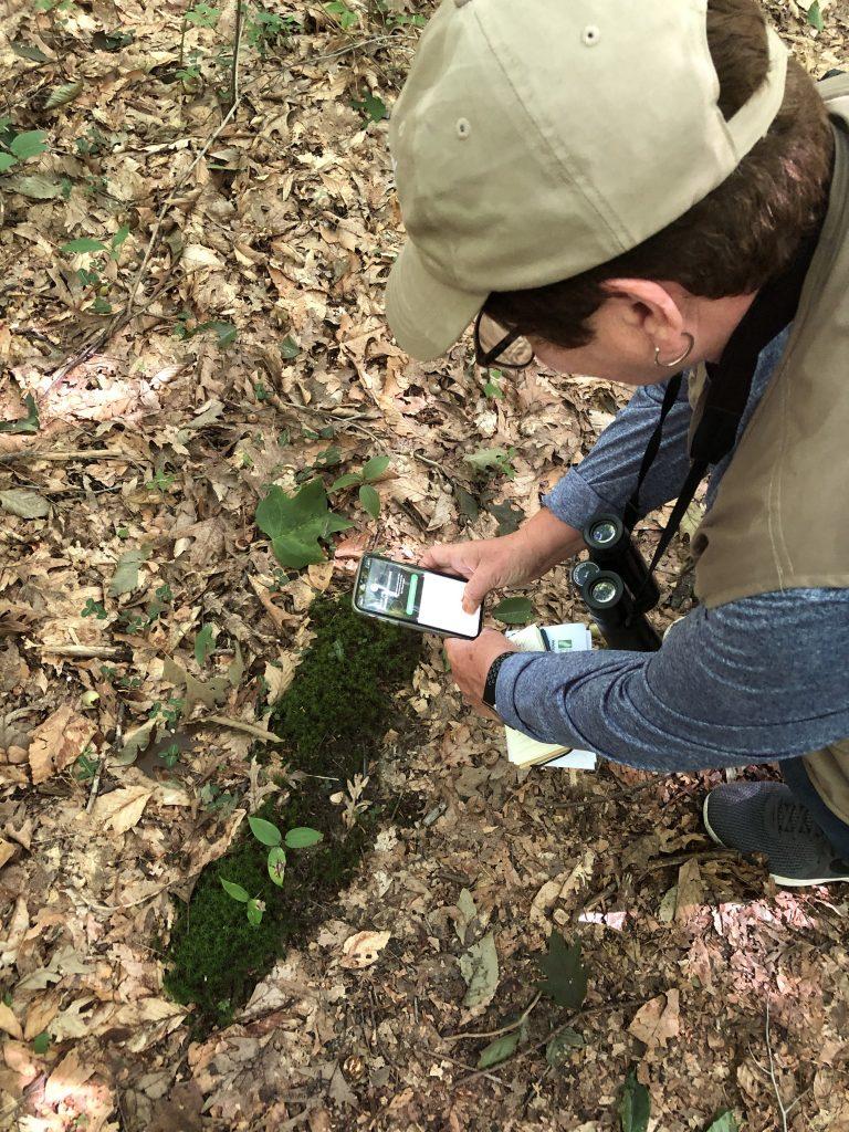 Maureen Kolbusz photographing moss at Ambler Flatwoods