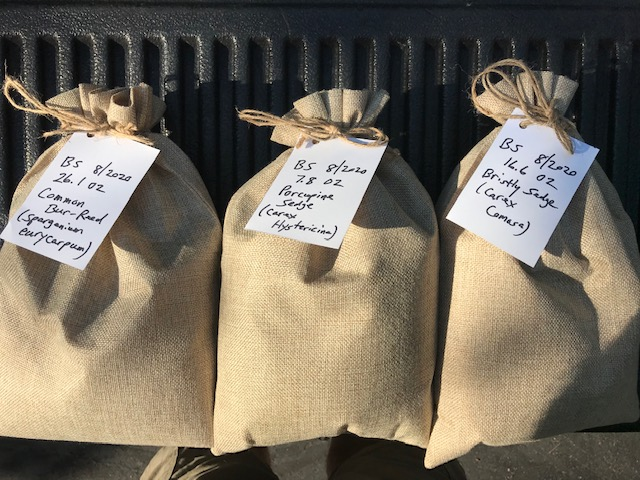 Bags of collected native plant seeds