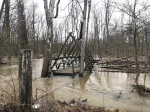A log bridge is pictured surrounded by high water in a floodplain forest after a heavy rain
