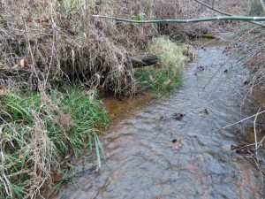Creek next to potential den in bank
